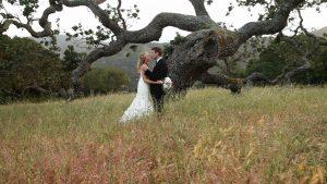 Holman tree kiss